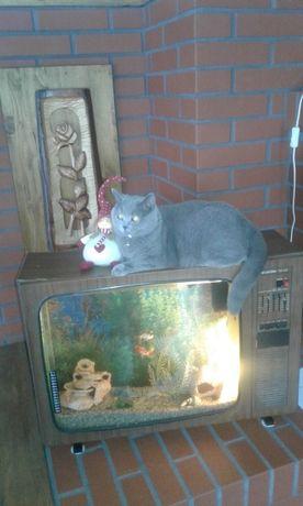 Akwarium w telewizorze