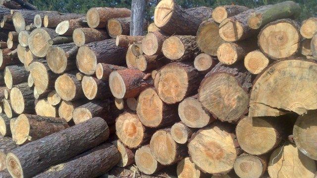 drzewo opałowe, drewno, sosna, osika, dąb