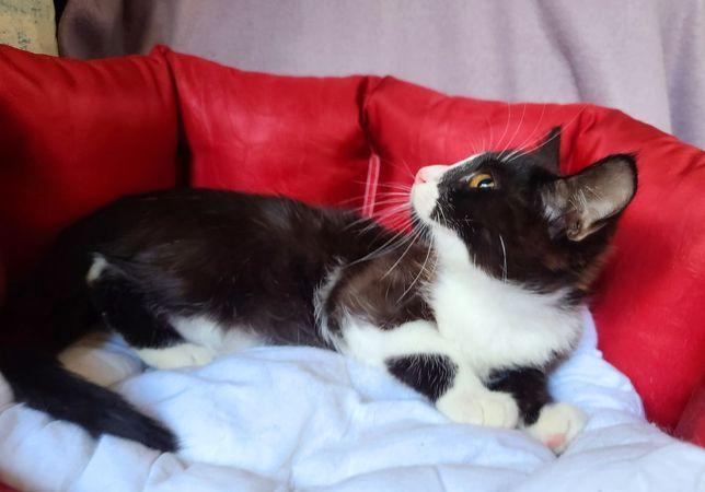 Малышка Феличита! 3 месяца (кот, кошка)