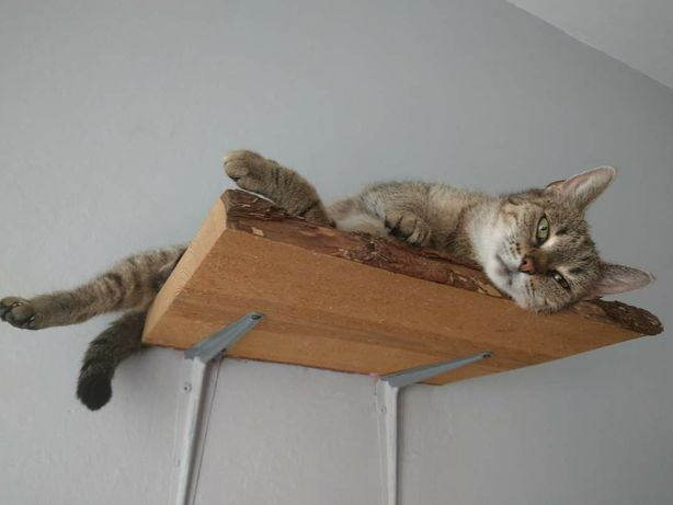 Uszka kotka kot szuka domu swojego człowieka bura burasek