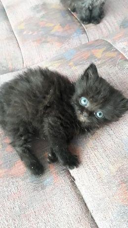 Кіточка