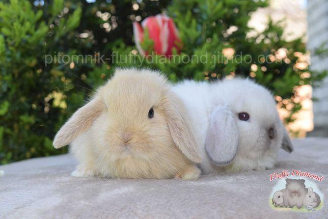 Карликовые кролики из питомника Fluffy Diamond. Большой выбор!Доставка