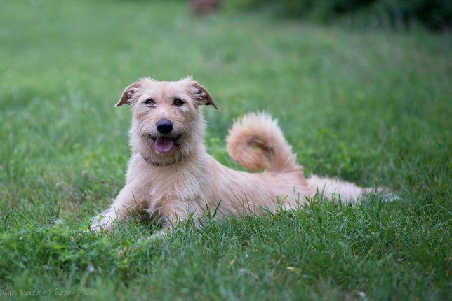 Отдам в хорошие руки великолепную собаку Тайри .
