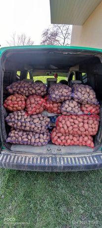 Картопля на їду свіженька
