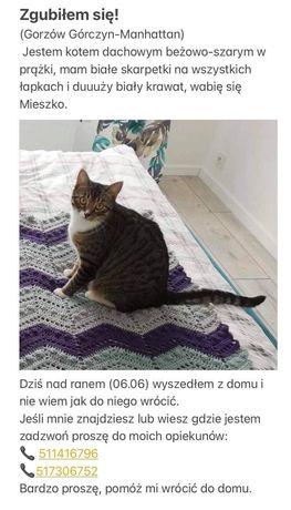 Zaginął kot. Gorzow, okolice kupca gorzowskiego, kolorowe osiedle