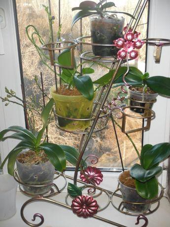для цветов и орхидей