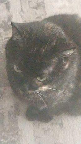 9 letnia kotka pilnie potrzebuje nowego domu, kogos kto ja pokocha.