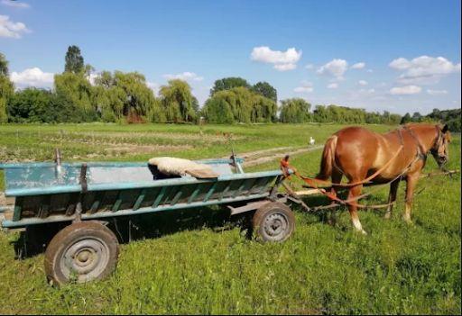 Терміново продам 3 вози кінні, конячі. Коня