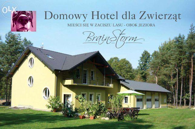 Hotel dla Psów. Labrador,Owczarek,Husky,Golden,kundel, noclegi, Wczasy