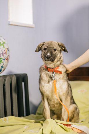 Небольшая скромная собачка Оливия ищет дом!