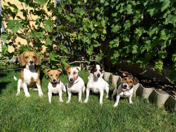 Профессиональная дрессировка собак,гостиница для собак