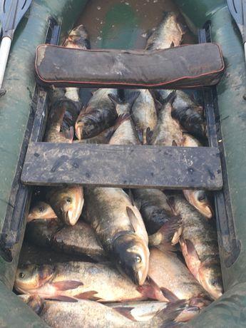 Продам живую свежевыловленную рыбу карпа,амур,толстолобика