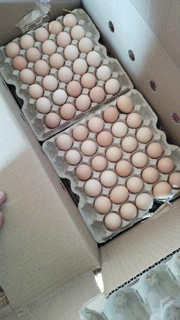 Инкубационное яйцо бройлер оптом