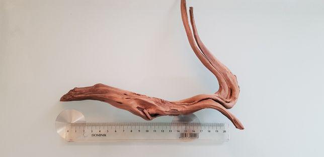 Korzeń red moor