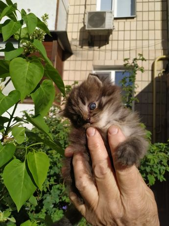 Київ, чудове кошенятко в пошуках родини