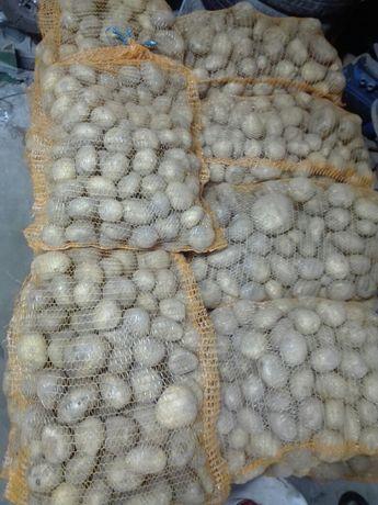 Ziemniaki jadalne ruzne odmiany