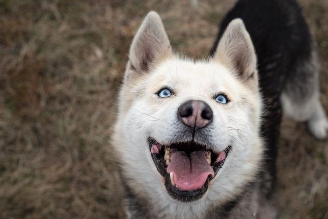 LOKI-husky-mam ADHD a Ty?