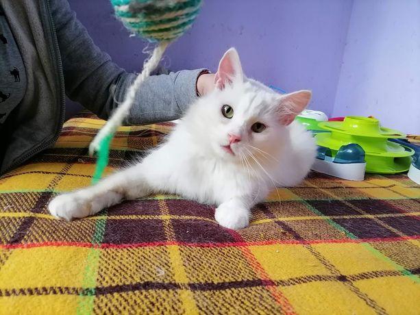 Długowłosy kociak do adopcji