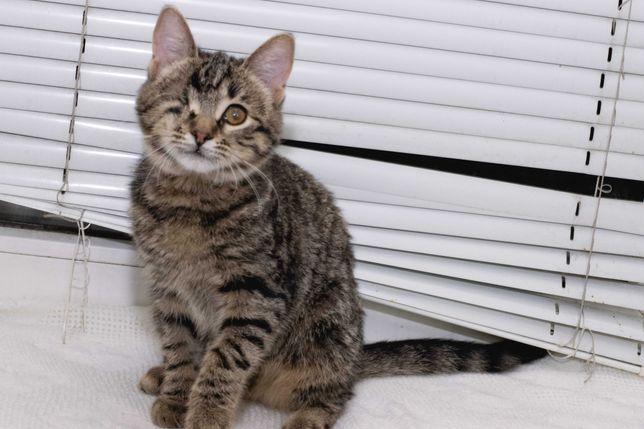 Ласковый котёнок-тигрёнок Карамелька (4 месяца)