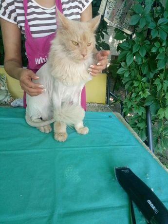 Гигиеническая стрижка котов.