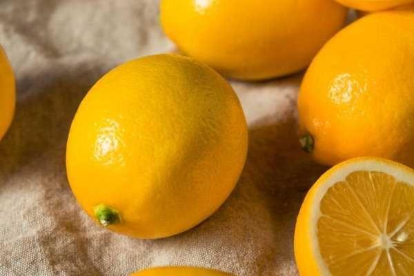 Plantas de Limão Meyer