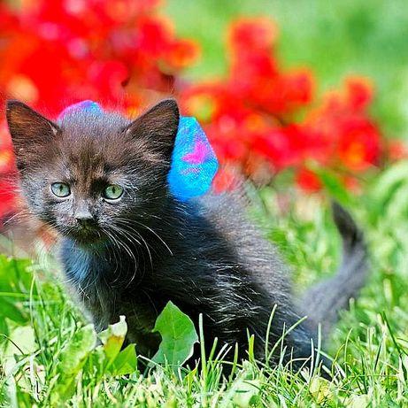 Чудесный черный котенок - мальчик ищет маму!!