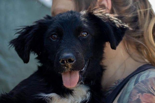 Bruno szczeniak do adopcji