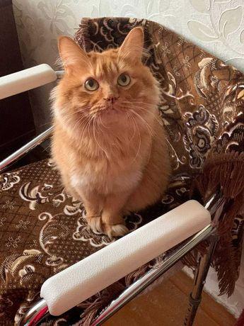 Продам кота Курильский Бобтейл