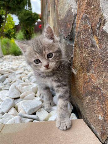 Чудова кішечка шукає дім
