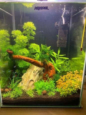 Akwarium Aquael Shrimp Set II 30