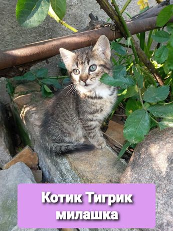Красивые котята ищут семью