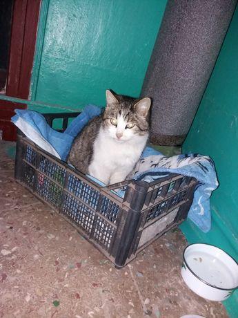 Кошка кошечка потеряшка котенок