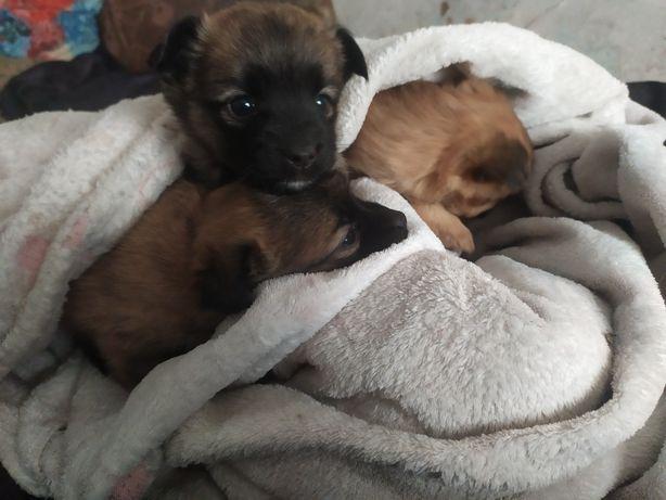 Самые милые собачки