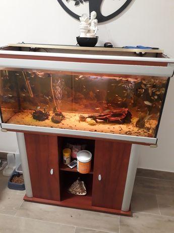 Aquário com móvel e peixes