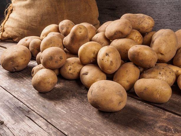 Sprzedam ziemniaki. Odmiana GWIAZDA 0,80 zł/kg