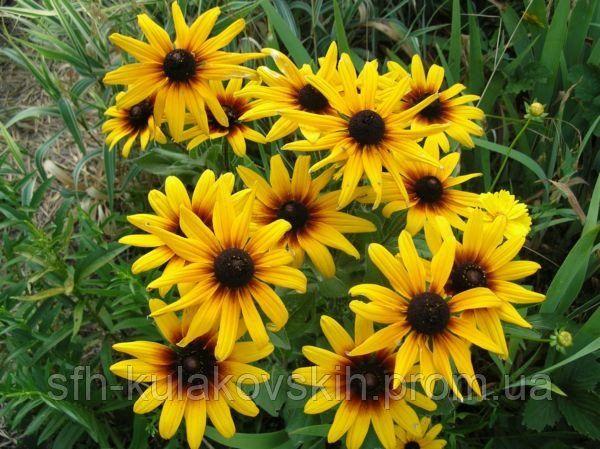 Цветы на клумбу квіти сад багаторічні на дачу многолетние набор обмен
