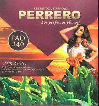 PERRERO kukurydza FAO240 - 50 tys. nasion