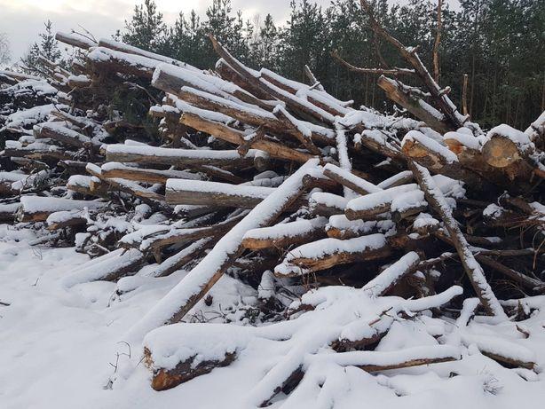 zrębka drzewna sprzedam