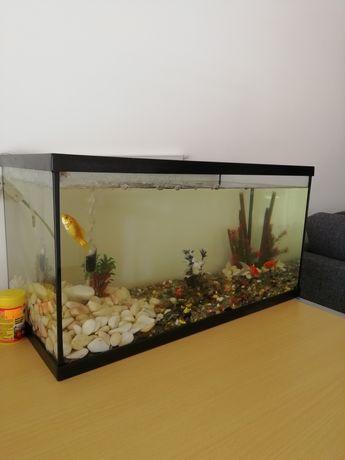 Aquário para peixes de água fria