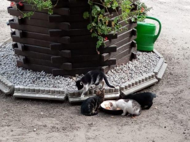 Oddam małe koty (dowóz)