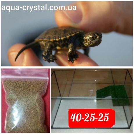 Комплект : маленькая черепаха + террариум +корм. Доставка по Украине.