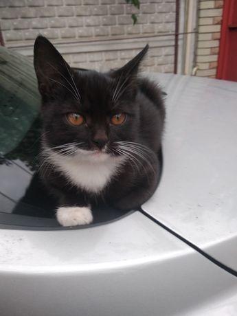 Котёнок (кошечка)