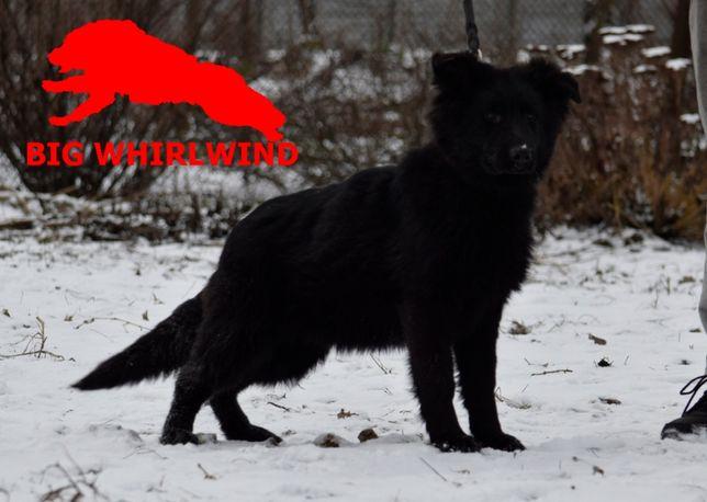 Чорная дш КСУ + Rabies