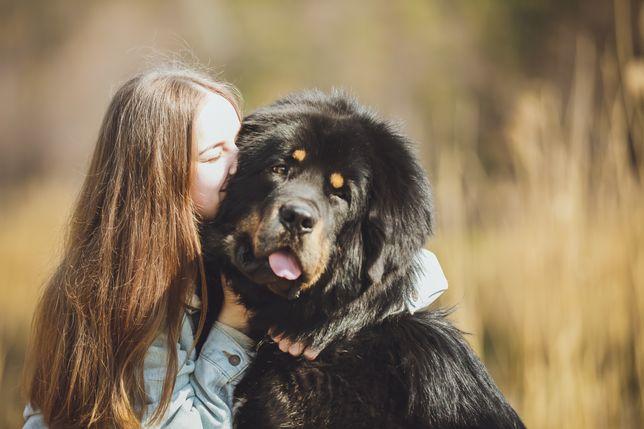 Фотограф, фотограф собак , фотосессия с собакой