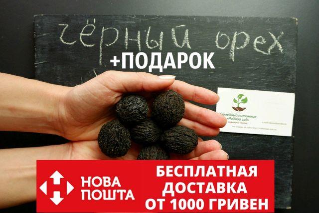 Орех Чёрный 10 штук семена на саженцы, горіх чорний, не грецкий+бонус