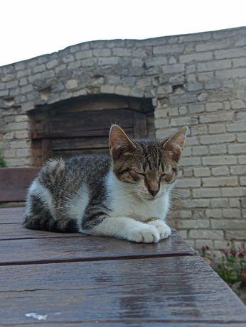 Kociak szuka domu