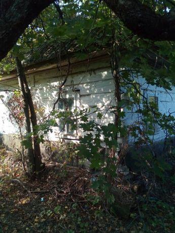 Дом, с. Белики, Козелецкого р-на, 80 км от Киева, лес и речка Десна