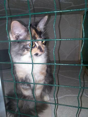 По.Котовского.найдена кошка