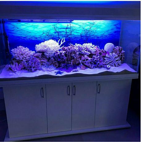 Прокат товаров : террариум, аквариум.