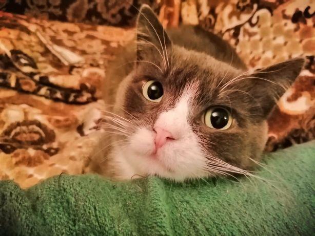 Очень красивый котик ищет дом.Кот.